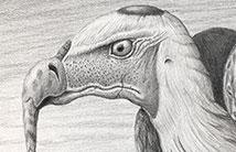 Vulture-Esque